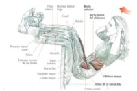Guía de ejercicios abdominales (XXIV): Elevaciones de tronco en suspensión en banco específico