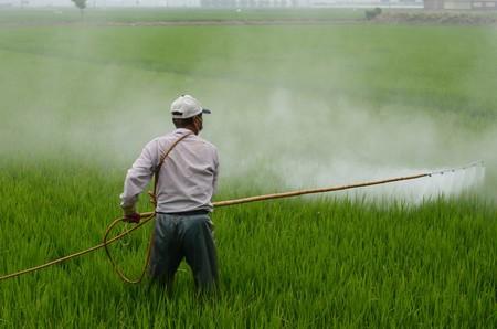 Herbicide Avignon In Rice Field Avignon A Surname Hiv Pesticide 765968