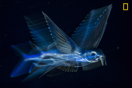 Ngnp 3rdplace Underwater