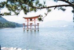 Japón, innovador pero no muy acelerado