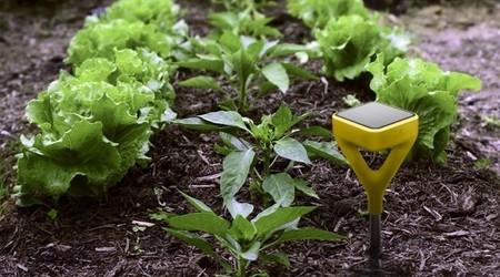 Edyn, el sistema inteligente que te ayudará a tener un huerto ecológico en casa