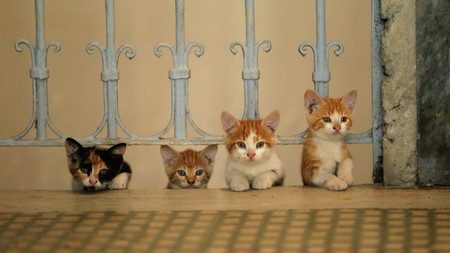 'Kedi: Gatos de Estambul', una hermosa carta de amor felina