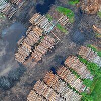 La gran fiebre de la madera: sus precios se han disparado y no hay suficiente para todo el mundo