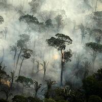 Los agricultores del Amazonas se enfrentan con los incendios a una pescadilla que se muerde la cola