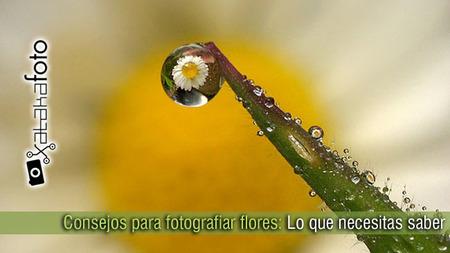 Consejos para fotografiar flores: Lo que necesitas saber
