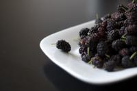 Moras, la fruta del fin del verano