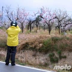 Foto 4 de 8 de la galería la-ruta-fallida-de-los-almendros-en-flor en Motorpasion Moto