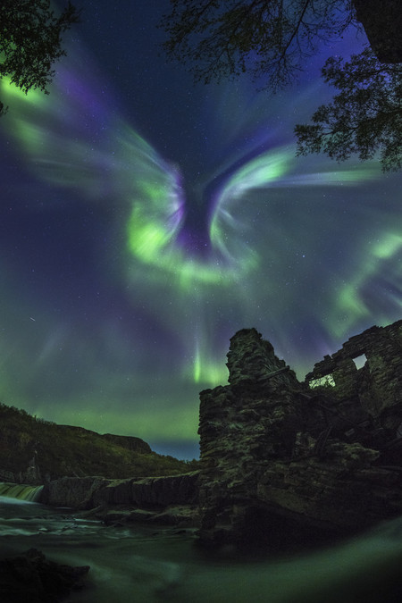 Aurora Is A Bird R Alexander Stepanenko