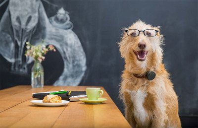 Whistle busca el cuantificador de perros definitivo tras su última adquisición