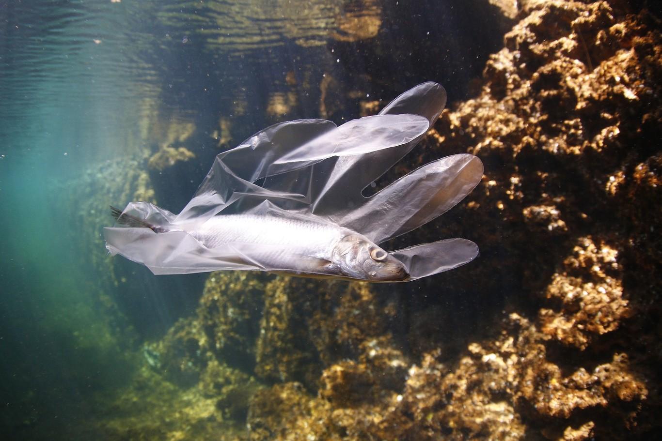 En México uno de cada cinco peces podría tener plástico en sus vísceras, según este estudio