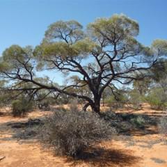 Foto 9 de 22 de la galería colores-del-gran-desierto-de-victoria en Xataka Ciencia