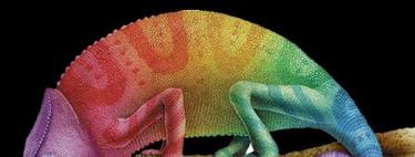 ¿Los camaleones cambian de color realmente?