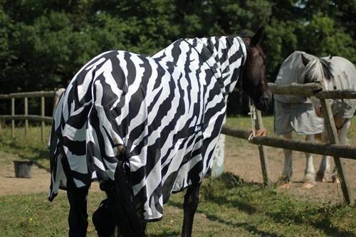 Se demuestra para qué sirve que las cebras tengan el cuerpo cubierto de rayas