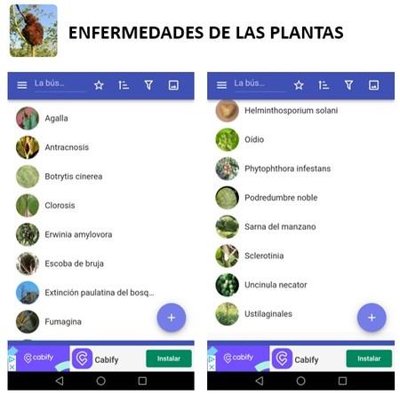 11 Enfermedades De Las Plantas