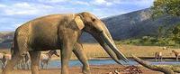 Hallados los restos de un mastodonte de hace 8 millones de años
