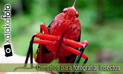 Consejos para hacer fotografía macro de insectos (I)