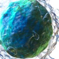 Hay inmunidad frente al COVID más allá de los anticuerpos: un equipo australiano encuentra pruebas de memoria inmunitaria a largo plazo gracias a las células B