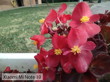 Xiaomi Mi Note 10 Macro Dia 02