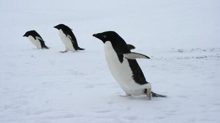 Qué es init, el sistema de arranque de Linux (y qué alternativas existen según la distribución que uses)