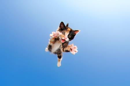'Pounce', de Seth Casteel: Lanzando gatitos al aire para lograr unas fotos tan tiernas como divertidas