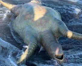 Descarta Gobierno de México efectos ambientales graves por derrame de Grupo México