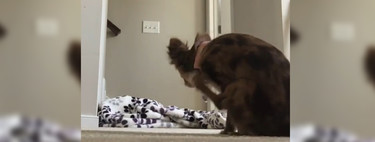 El reto de la manta y el perro empieza a dar sus frutos: cuando el #WhatTheFluffChallenge sale mal