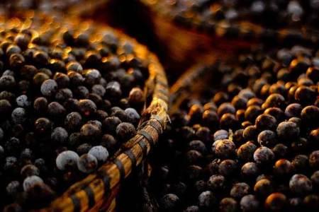 Açai, el antioxidante por excelencia