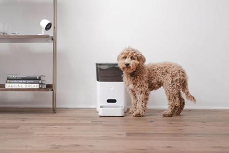 Petnet, un comedero inteligente para mascotas, está dejando de dispensar comida y alegan el problema al COVID-19