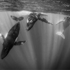 Foto 9 de 12 de la galería la-belleza-animal-en-blanco-y-negro en Xataka Foto