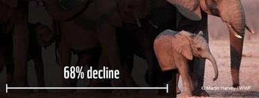 Las poblaciones mundiales de animales han disminuido en promedio dos tercios en menos de medio siglo
