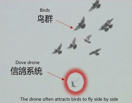 Aves Roboticas China 3