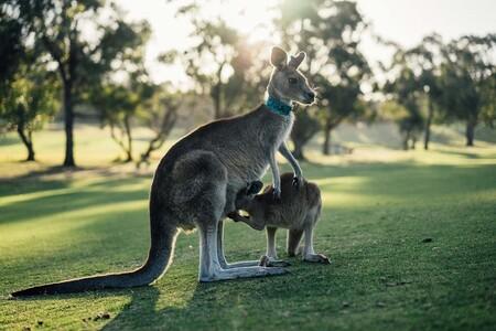 Australia 1180394 1280