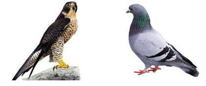 ¿Halcón o paloma? Teoría de juegos y cooperación.