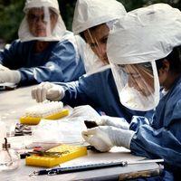 La OMS no recomienda hacer pruebas masivas con tests rápidos en México: el país hará solo algunas para detectar casos leves