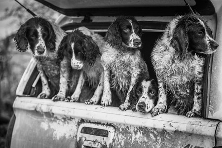 Dpoty Dogs At Work 2nd C Lucy Charman The Kennel