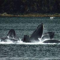 Cientos de ballenas se están reuniendo en una diminuta región del océano y los científicos ya saben por qué