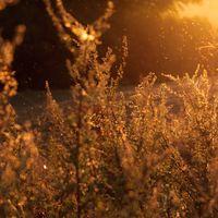 La época de polen ya está aquí: algunas recomendaciones para sobrellevarlo lo mejor posible