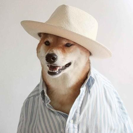 En El Nuevo Ano Chino Dedicado Al Perro Recordamos Los Mejores Looks De Nuestro Favorito Mensweardog 03