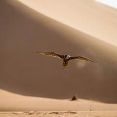 Foto 30 de 36 de la galería bentley-bentayga-falconry en Motorpasión