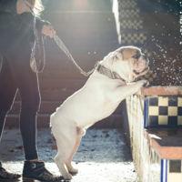Tu perro es más molón que tú. Y todo gracias a Brott barcelona