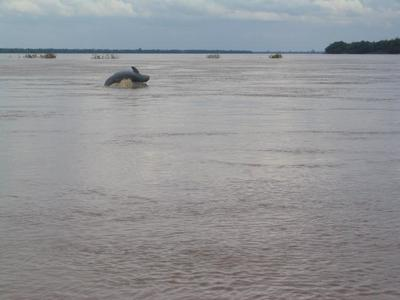 Avistar a los delfines de Irrawaddy en Kratie, Camboya