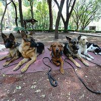 Ciudad de México tendrá la primera base de datos de mascotas, ahora será más fácil recuperarlas si se pierden