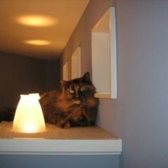 Foto 2 de 3 de la galería una-pasarela-para-tus-gatos en Decoesfera