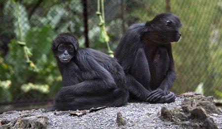 Tarde de zoológico gratis en Córdoba