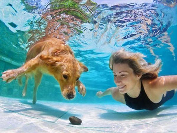 Los perros ya pueden respirar debajo del agua gracias a esta tecnología