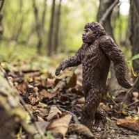 Por fin, hay más jóvenes estadounidenses que 'creen' en la evolución en vez del creacionismo