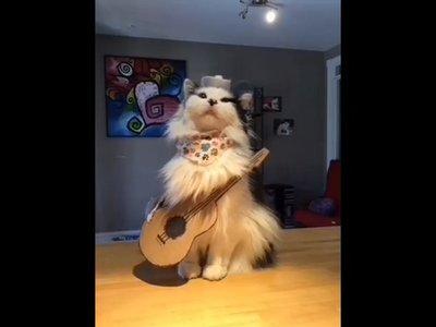 Me he pasado dos horas en Musically y he visto a gatos imitando a Elvis y a gente grabarse con el pie