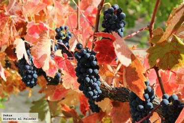 El vino también será candidato a ser considerado Patrimonio de la Humanidad