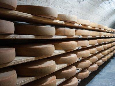 Una sustancia del queso alarga la vida hasta en un 25% (en ratones)