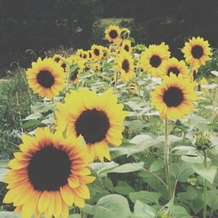 Día De La Madre Y Si Se Lo Dices Con Flores Guía Rápida Para
